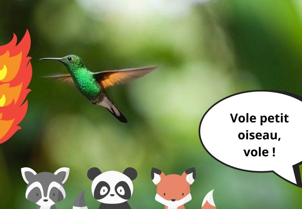 moteur-recherche-alternatif-ecolo-lilo-legende-colibri